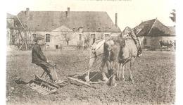 CPA Savigny-sur- Bray (41) Herse Acmé En Travail à Savigny-sur- Bray - Francia