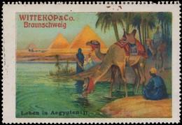 Braunschweig: Leben In Ägypten II Reklamemarke - Erinnophilie