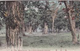 THE NOZOMI NO OKA (HILL OF HOPE) SANAPUCHI, HOKKAIDO. CIRCA 1917 - BLEUP - Giappone