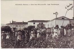Cpa Régnié  Clos Des Bulliats - Autres Communes
