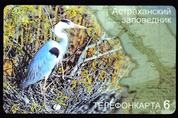 Russia 2004 / Telefonkarta 6 / Pre Paid Phone Card / Bird - Russia
