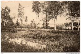 Lichtaart Kasterlee Marécages 1912 Moerassen - Kasterlee