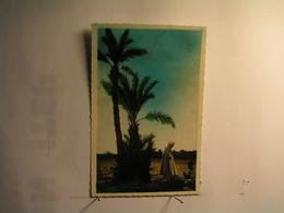 Afrique - Le Conte à L'ombre Des Palmiers - Cartes Postales