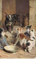 5 Chats Et Chien Bouledogue-Illustrateur Non Signé - Cpa Voyagée 1913 -Scans Recto Verso- Paypal Free - Chats