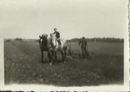 PHOTO DE 9X6 CMS DE DEUX CHEVAUX DE LABOUR AU TRAVAIL - Beroepen