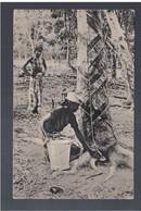 Malaysia Tapping Rubber, Malay Peninsula Ca 1920 OLD POSTCARD - Malaysia