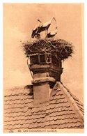 Les Cigognes En Alsace - Oiseaux