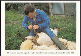 56 - QUISTINIC - Armand Guyader Rogne Les Ongles D'une Brebis - 1988 - Autres Communes