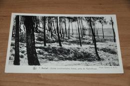 9582-      LES PAYSAGES BELGES, LA CAMPINE, KALMTHOUT - Kalmthout
