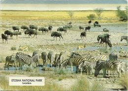 AK / PC Namibia Etosha National Park Zebras Büffel Farbfoto #2529 - Namibia