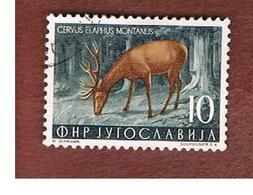 JUGOSLAVIA (YUGOSLAVIA)   - SG 767 -    1954  ANIMALS: CERVUS ELAPHUS    -   USED - Usati