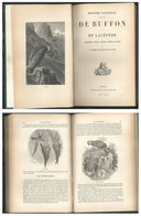 Buffon Et Lacépède   1883 - 1801-1900