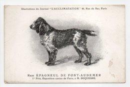 - CPA CHIENS - Race ÉPAGNEUL DE PONT-AUDEMER - 1er Prix, Exposition Canine De Paris - - Chiens