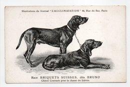 - CPA CHIENS - Race BRIQUETS SUISSES, Dits BRUNO - Chiens Courant Pour La Chasse Du Lièvre - - Chiens