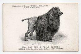 - CPA CHIENS - Race CANICHE A POILS CORDÉS - BIJOU, 1er Prix, Exposition Canine De Paris - - Chiens