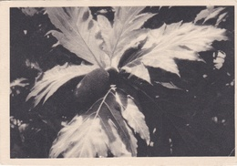 WALLIS ET FUTUNA :    :  Editions IONYL  . Oblitération Wallis  Protectorat Français De 1949 - Wallis-Et-Futuna