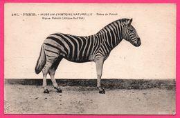 Paris - Museum D'Histoire Naturelle - Zèbre De Potock - Equus Potocki - Afrique Sud Est - Edit. BOSLE - Cebras
