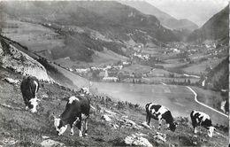Le Biot (Haute-Savoie) - Pâturage Du Haut-Thé, Vaches - Edition Combier -  Carte CIM N° 4 - Francia