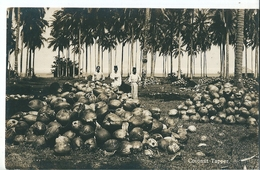 SINGAPOUR   (  Malaisie  )   Coconut  Tapper  . - Malaysia