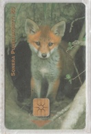 FINLAND 1999 FOX - Jungle