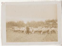 Grimbergen - Kudde Schapen Met Herder - Foto Formaat 12.5 X 18 Cm - Lieux