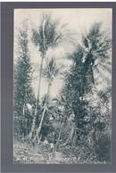 GUATEMALA  Tropical Guatemala C.A. Nr 196, 1913 OLD POSTCARD - Guatemala