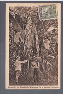NICARAGUA Recuerdos De Bluefields, In A Banana Plantation 1912 OLD POSTCARD - Nicaragua