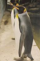 Postcard King Penguin Hillside Ornamental Fowl Mobberley Cheshire  Noel Tatt Limited Edition My Ref  B23596 - Birds