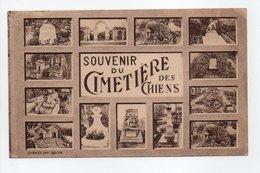 - CPA ASNIÈRES (92) - Souvenir Du Cimetière Des Chiens - Photo COMBIER - - Asnieres Sur Seine