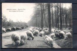 40 - Mézos - Dans Les Pins - Un Troupeau De Moutons - Autres Communes