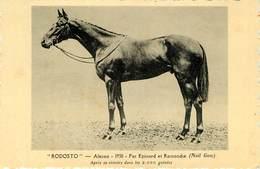 Sports - Hippisme - Chevaux - Rodosto 1930 -Par Epinard Et Ramondie -Après Sa Victoire Dans Les 2000 Guinées - Newmarket - Horse Show
