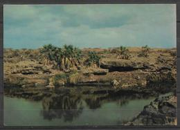 SAUDI ARABIA POSTCARD , VIEW CARD WADI JIZAN - Arabia Saudita