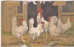 Coq Et Poules - Oiseaux