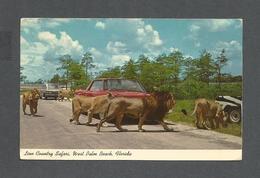 ANIMAUX - ANIMALS - LIONS - LION COUNTRY SAFARI WEST PALM BEACH FLORIDA - Lions