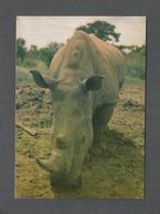 ANIMAUX - ANIMALS - WHITE RHINOCEROS - PHOTO PELLIS - Rhinocéros