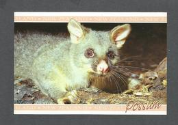 ANIMAUX - ANIMALS - POSSUM FROM NEW ZEALAND - PHOTOGRAPHY BY ROB L. SUISTEAD - Autres