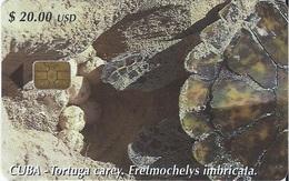 CUBA - TORTUGA CAREY - TURTLE - Cuba