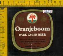 Etichetta Birra Oranjeboom Dark Lager Beer - Olanda - Birra