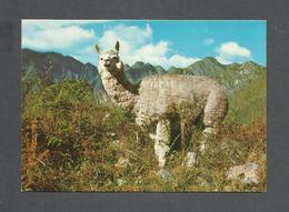 ANIMAUX - ANIMALS - PERU ALPACA EN LA SIERRA - PAR SWISS FOTO - Autres