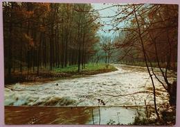 MONZA - Il Parco - Parc, Park, Wood, Bois, Bosco - Nv L2 - Monza