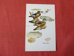 Wood Duck  > Ref 3341 - Birds