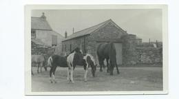 Cornwall Nr Liskeard Rp Horses And Ponies In Farmyard Posted 1971 - England