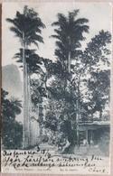 Brazil Rio De Janeiro 1905 - Rio De Janeiro