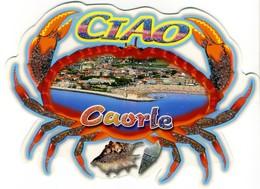 SHELL  CONCHIGLIA  COQUILLE  CAORLE  VENEZIA  Crab Crabe - Fantasia