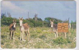 #09 - BONAIRE-02 - DONKEYS - Antilles (Other)