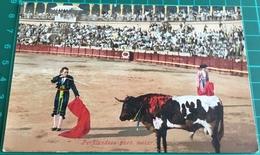 Bullfighting ~ Perfilandose Para Matar ~ Matadors ~ Bull - Corrida
