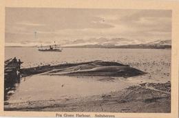 CPA / Spitsbergen Spitzberg   (Norway Norvège) Fra Green Harbour Baleines  Whale  Ed Ritter Bergen - Norvège