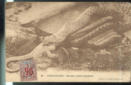 CPA Diégo Suarez - Serpent Contre Caméléon - Timbre Sultanat D'Anjouan - Madagascar