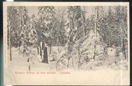 CPA Canada - Winter Scene In The Woods - Non Circulée - Quebec