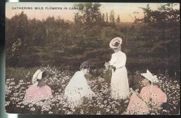 CPA Canada - Gathering Wild Flowers In Canada - Circulée 1909 - Quebec